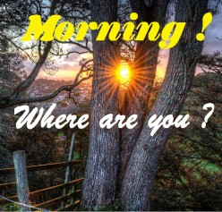 Morning, Where are you? (Poem)