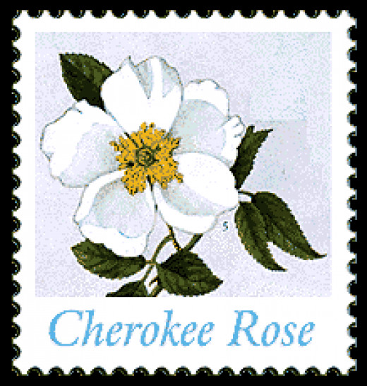 A stamp on Cherokee rose