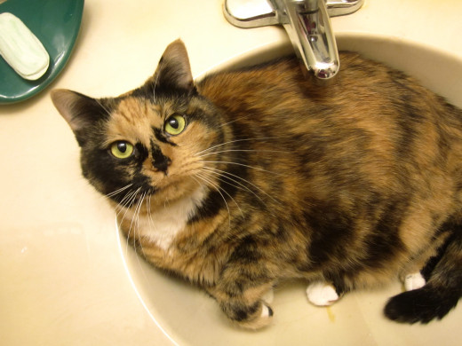 And last but certainly not least, my own special little sink-sitter, Coco-Puff!