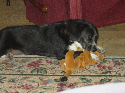 A Much Younger Tipper in Her Glory.  This has been her favorite toy for the past 11 years.