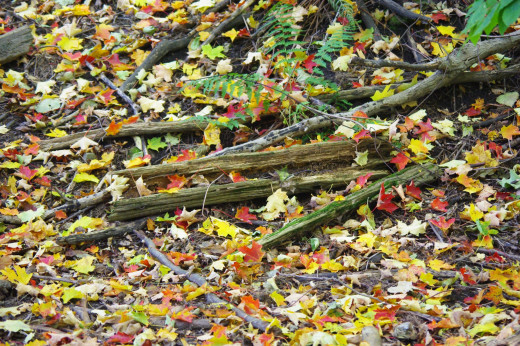Fallen leaves showing all shades of colours.