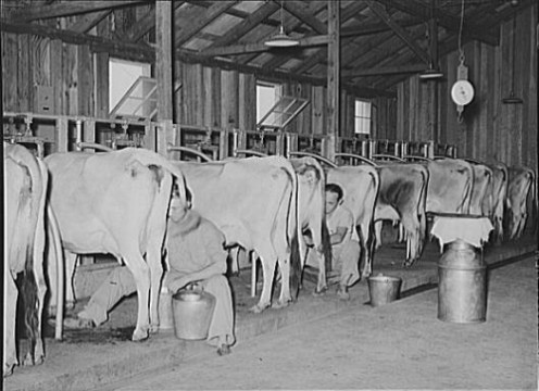 gone are the days of dreary bathing in dairy barn like atmosphere,....