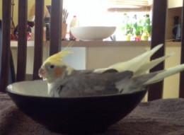 Flippy having a bath