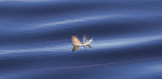 A Floating Feather in the Waves of Life from Lutfi Shedraway flickr.com