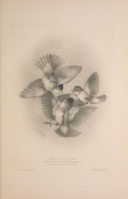 British Warbler H.E. Howard  {published 1907-1914}