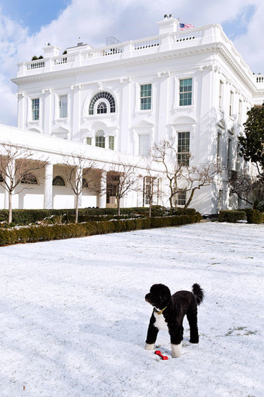Obama family dog.