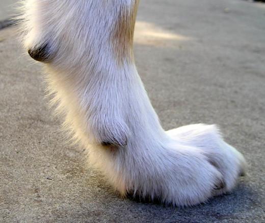 Dog's foot.