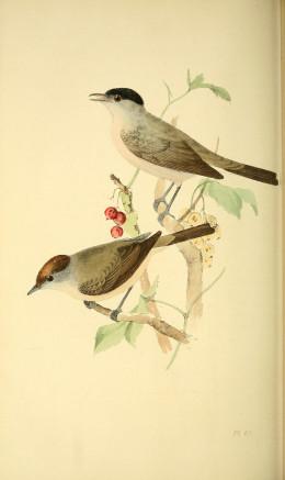 Meyer {1850}