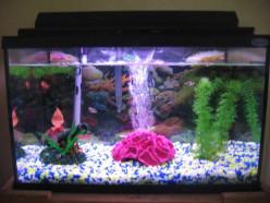The Beautiy Of Fish Tanks