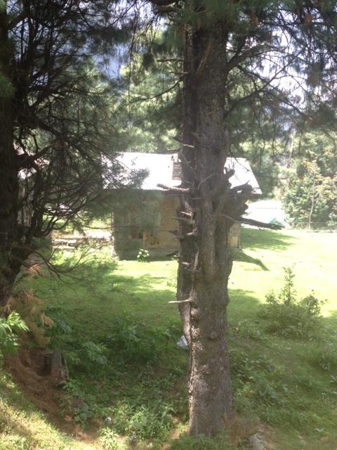 Trees through the trekking route, Pahalgam.