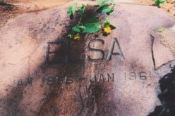Elsa's Grave, the Resting Place of a Proud Lioness