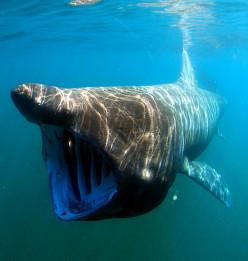 31 Phobias: #4 The Fear of Sharks