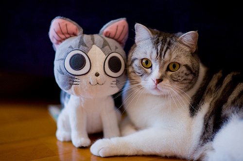This kitty looks like she's posing with her best friend.