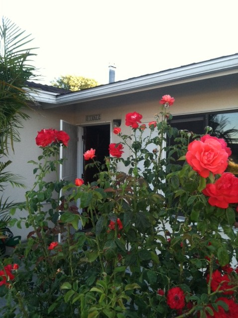 Did you know that I get just as much happiness from tending to my roses as from the rose itself.