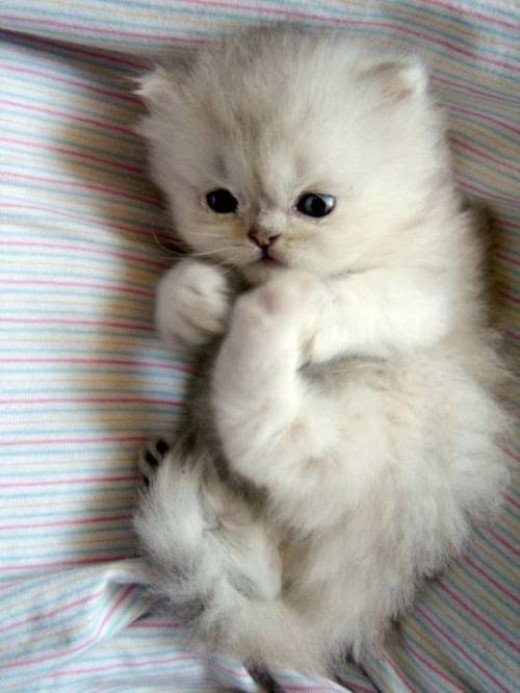 Don't forget to take lots of pics of your cat when she's still young.  She will grow up fast!