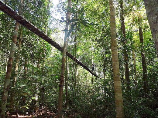 Taman Negara / National Park, Peninsular Malaysia