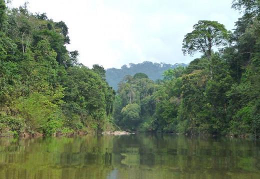 Endau-Rompin National Park, Peninsular Malaysia