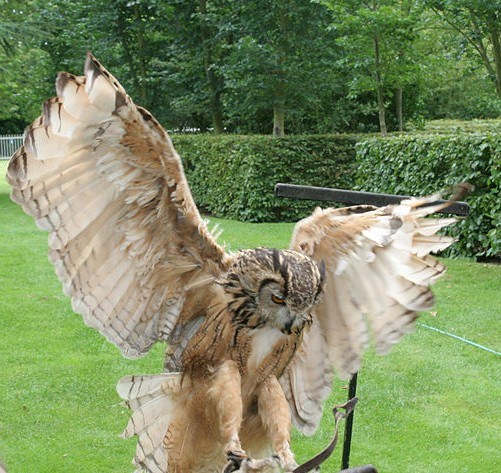 Owls and other species of birds have long been associated with death and the supernatural.