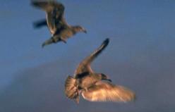 Natures Migration