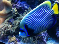 Look At These Extra-ordinary Beautiful Fish: 5 Amazing Fish in the World