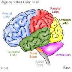 Brain Sicknesses