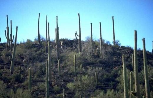 Desert Hillside