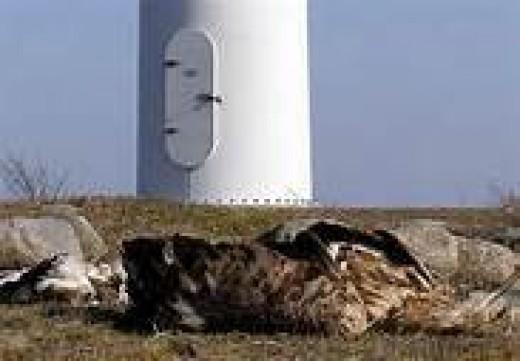 Wind Turbines and Birds:  A True Hazard
