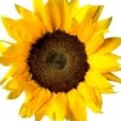 LivingLifeofLove profile image