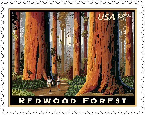 Priority Mail Stamp- California Redwoods