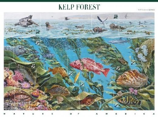 Nature of America: Kelp Forest Sheet