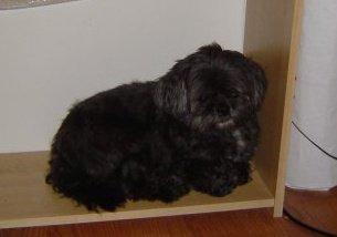 Bailey, sitting on an empty shelf