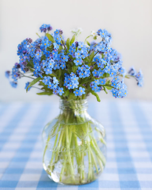a vase of forget-me-nots