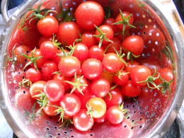 Fresh cherry tomatoes, perfect for drying