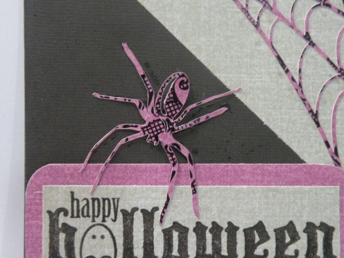 Smaller spider adhered to card