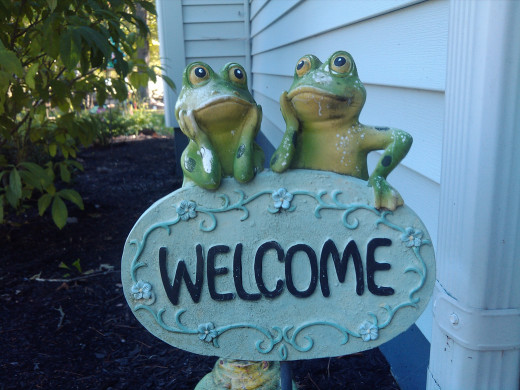 A happy ending for the frogs!