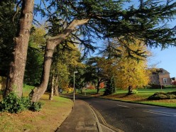 Streatham Drive. One of main arteries of Exeter University's Streatham campus climbing past the Washington Singer building (right).