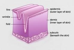 Neutrogena Healthy skin Anti-Wrinkle Cream - Ingredients
