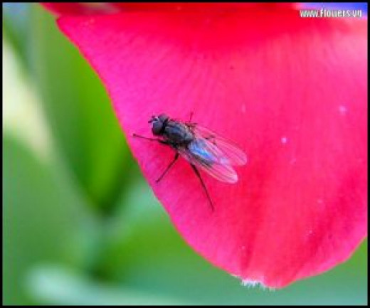 Common house fly - a quick thinker