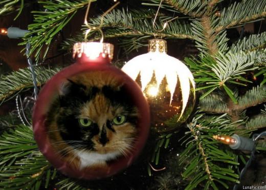 Coco-Puff Christmas ball