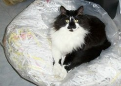 Adopting throw away pets: Tommy the Tomcat.