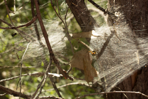 Interesting view of spider and web, adjust the exposure of left side to bring more focus to the spider.