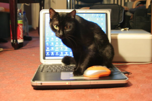 The cat who can probably type better than commenters with fake profiles