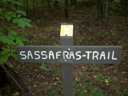Reedy Creek Nature Preserve You are now entering the Sassafras Trail