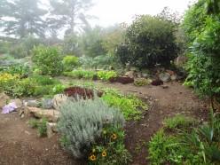 Growing a Doomstead Garden
