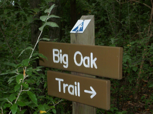 Reedy Creek Nature Preserve. You are now entering the Big Oak Trail.