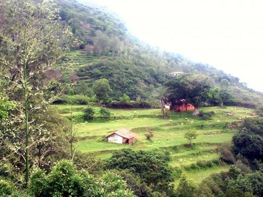 The valley en-route Ooty