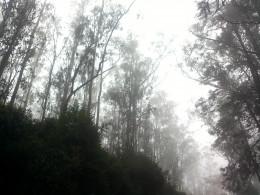 En-route Doddabetta Peak