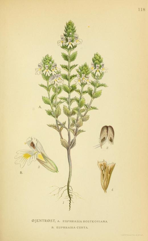 Billderafnorden's Flora { 1917-1927}