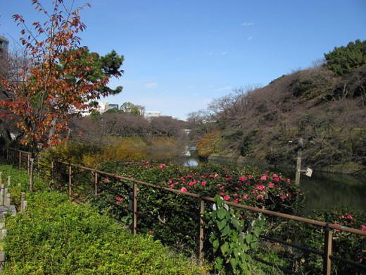 Beautiful view of the Chidorigafuchi moat in Kitanomaru Park, Chiyoda