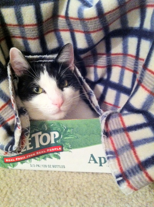 Two things can make almost any cat happy: a cardboard box and warm blanket.